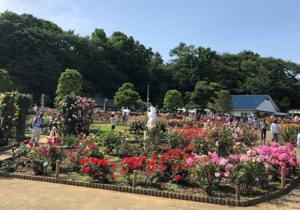 生田ばら苑